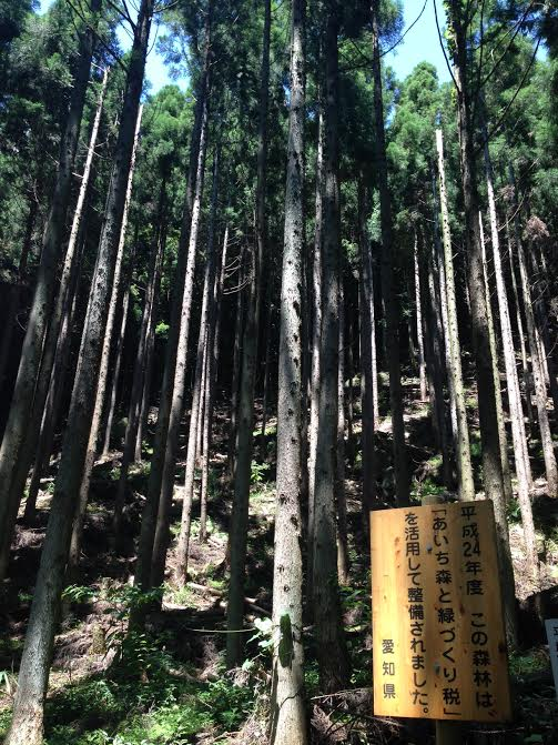 Understanding forest ecosystem services in Japan's satoyama landscape
