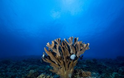 New study links land and sea through an ecological-economic model of coral reef recreation in West Maui, Hawai'i