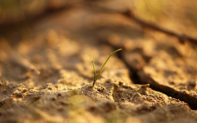 #WorldSoilDay: Innovation for soil biodiversity